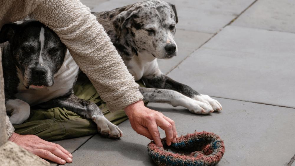 weekly veterinary news