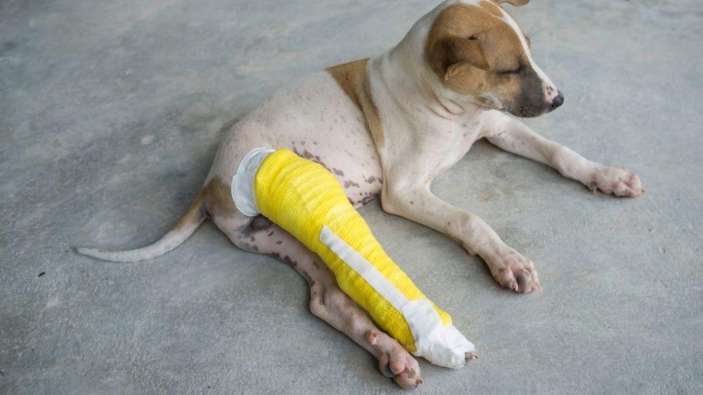 veterinary complaints